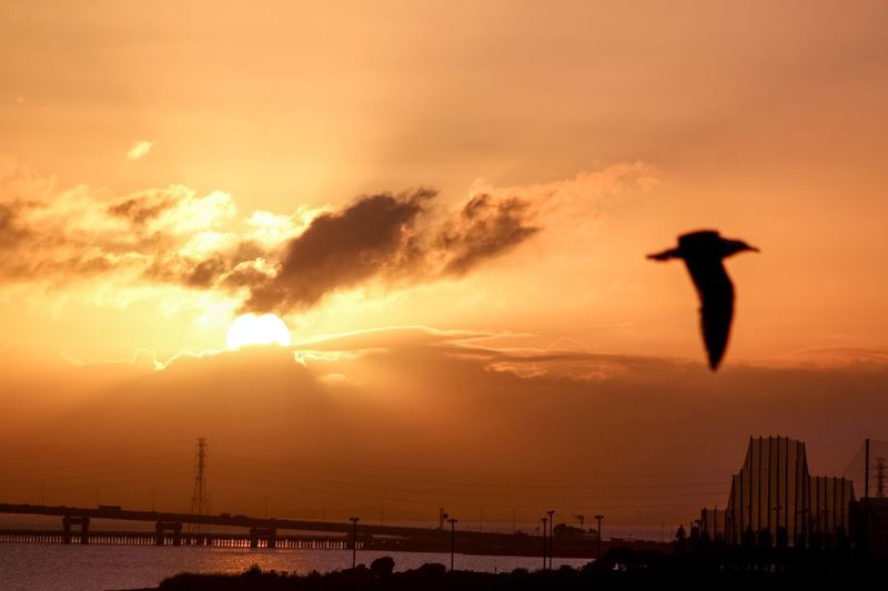 Sunrise_sunsets_aroundworld EyeEm Best Shots Eyemphotography Eye4photography  Birds Of EyeEm  San Mateo Bridge San Mateo Bridges Bridge Sunrise_Collection Birds In Flight Birds EyeEm Gallery Sunrise Bird Landscapes With WhiteWall Eyem