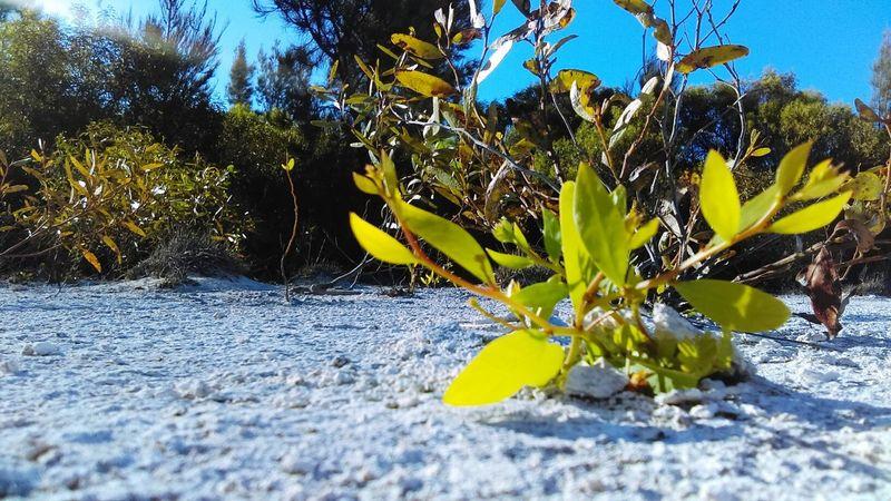 Whiteandgreen Nature Love