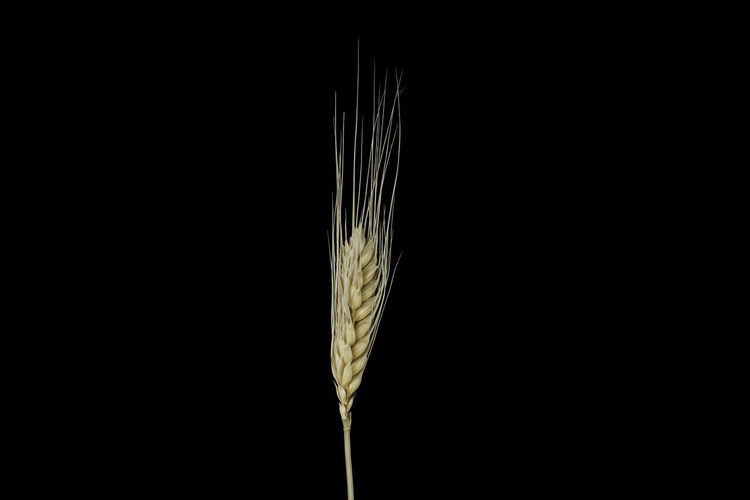 Close-up of feather against black background