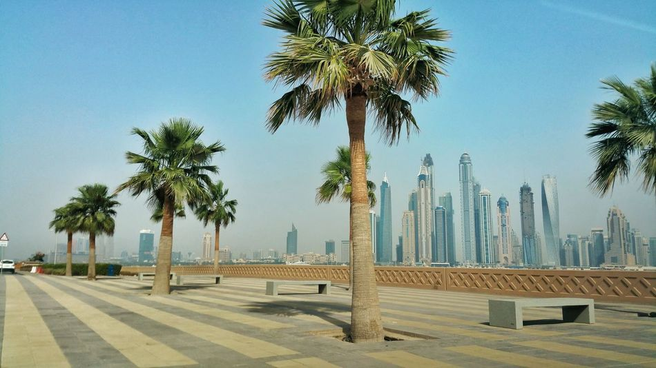 Palm Tree Tree Beach Sea Nature Summer Palm Outdoors Beauty In Nature Sky Water No People Day Dubai