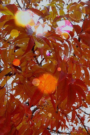 Orangeleaves Winterinarizona No People MesaAZ Brightcolor Orangeandred Fall Colors