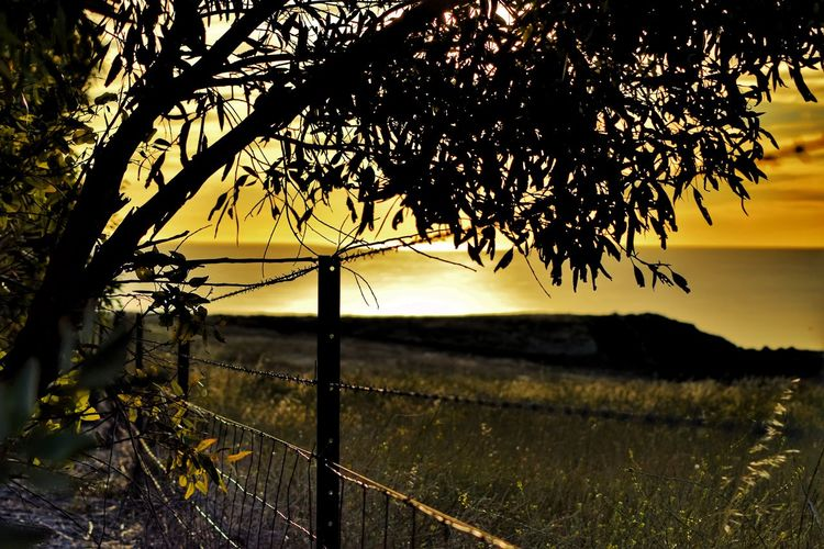 Hallet Cove South Australia. Tree Sunset Nature No People Beauty In Nature Silhouette Sky Outdoors Water Tranquil Scene Tranquility Scenics Day Close-up Eye4photography  Taking Photos EyeEm Gallery Eye Em Nature Lover Tranquility Barbedwire Wire Fence Close Up, Seascape Photography Dramatic Sky Eyemphotography Eye4photography
