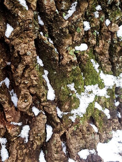Tree Bark Texture Backgrounds Full Frame Textured  Close-up