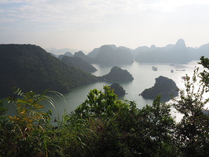 Ha Long Bay Beauty In Nature Scenics - Nature Water Sea Karstic Rock Formations Tree Nature Non-urban Scene Mountain Range Mountain EyeEm Nature Lover