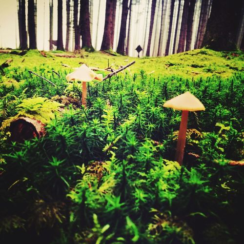 Pilze Shrooms Nature Moos Wald Waldspaziergang Outdoors No People The Great Outdoors - 2017 EyeEm Awards