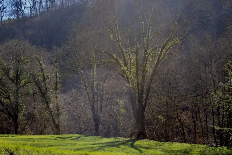 Tree Nature Tranquility Tranquil Scene Forest Bare Tree Landscape Beauty In Nature