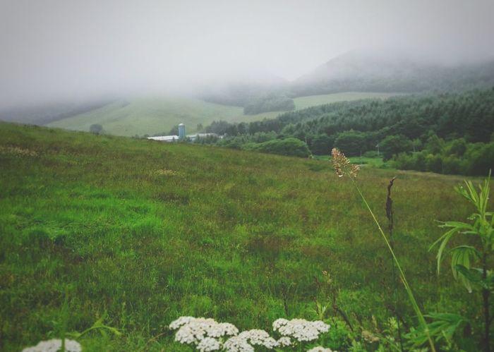 モヤる🌁町のそのへん… Fog Nature Farm Landscape Rural Scene Green Color Outdoors No People Rural Scenes EyeEm Selects Rural Landscape Landscape_photography EyeEmNewHere Black_chica1707 Hokkaido 自然 Hokkaido,Japan Rural Area 田舎暮らし Misty Landscape Misty Days Misty Forest