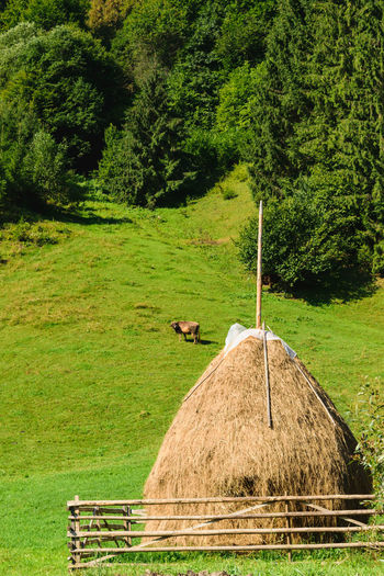 traditional haystack in Rucar area, Romania. green hills, green forest and single cow grazing Agriculture Calm Country Farm Field Grass Green Color Haystack Rural Stack Countryside Landscape Dry Farming Forest Golden Color Grass Green Color Harvest Hay Hill Hillside Outdoors Pile Scenics Slope First Eyeem Photo EyeEmNewHere