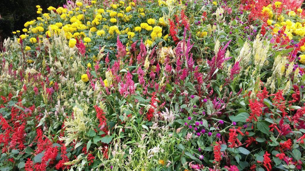 Bangalore times Bangalore Metro Bangaloredairies Bangaloredays Flower Show Garden City Peaceful Place Sunday Times Sunday Times Travel