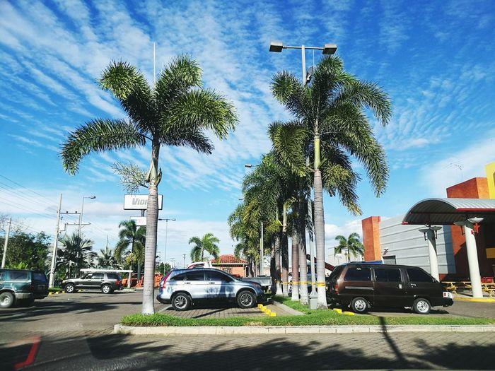 Palm Tree Sky Day Santa Ana ElSalvador  First Eyeem Photo