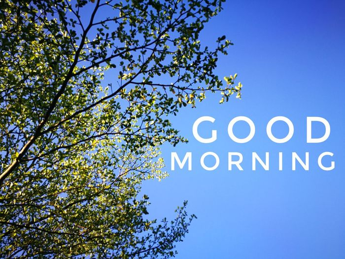 Good Morning Blue Sky Nature Photography Good Morning Have A Nice Day Motivation Greetings Hi Hello Alphabets Morning Tree Leaves Leaf Nature Photography Nature Sunny Day Sunny Day Monday Cloud - Sky Sky Blue Sky Tree Branch Clear Sky Blue Communication Text Sky Close-up Capital Letter Information