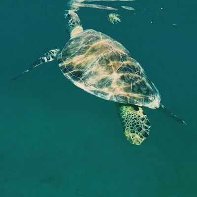 First Eyeem Photo Turtle Akumal Mexico Quintana Roo Vacation Beach
