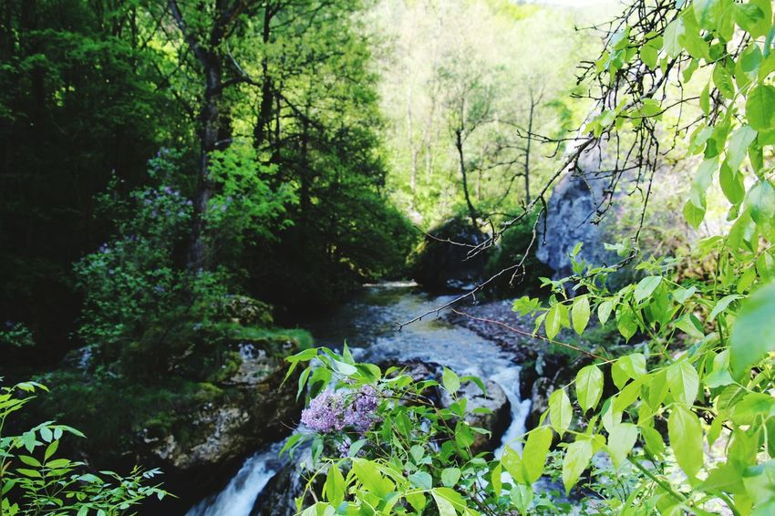 Tree Forest Water Nature Beauty In Nature Moss Growth No People River Outdoors Scenics Waterfall Green Color Tranquility Day Plant Landscape