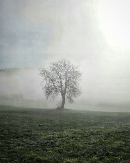 Spooky. Moody Sky Clouds And Sky No People Outdoors Landscape EyeEm Best Shots - Nature Nature Fog Tree Spooky Atmosphere