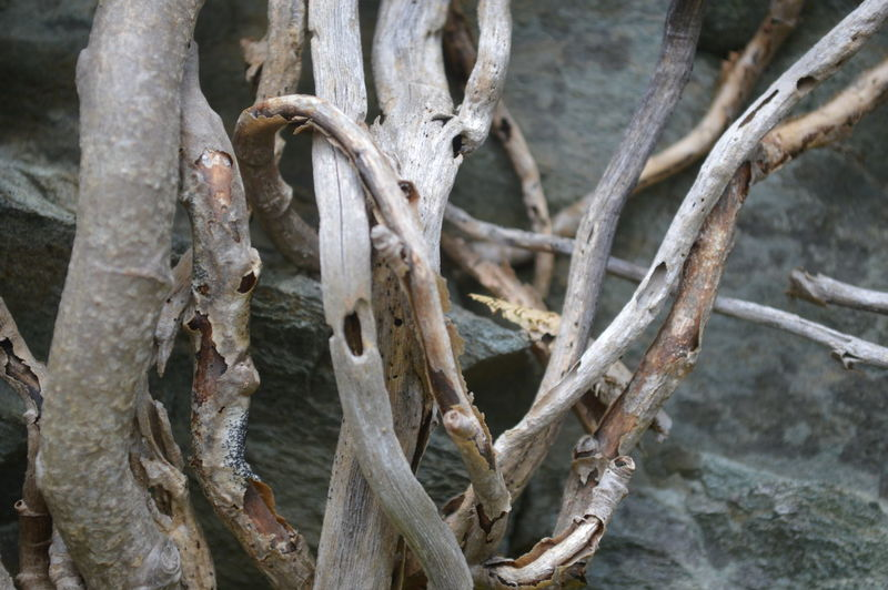 Beauty In Nature Branch Dead Plant Death In Nature Dried Plant Driftwood Flotsam Nature Sea Stuff Shoreline Twig Twisted Washed Ashore Wood - Material Wood And Rock
