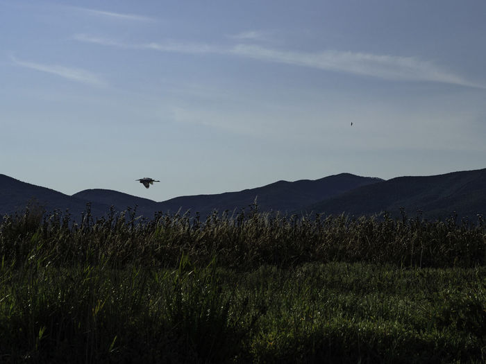 View of birds flying over land