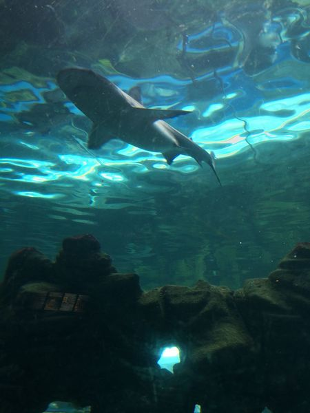 Under water shark Photography Shark Underwater Sea Life Sea Fish Photography
