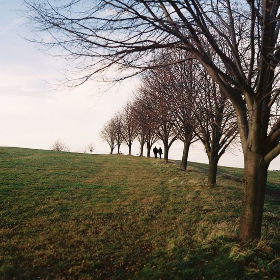 Pentacon Six TL | Zeiss Biometar 2.8/80 | Fuji 400H Tree Beauty In Nature Bare Tree Nature Grass Field Tranquility Landscape Sky Outdoors Branch Day Scenics Film Photography Filmisnotdead Fujifilm Analogue Photography Nature Autumn Colors Couple Love Medium Format Istillshootfilm First Eyeem Photo