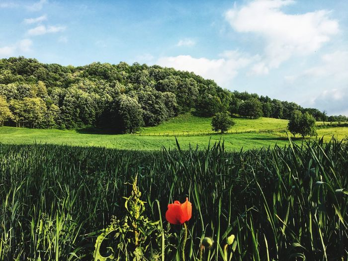 Nature Field Freshness Green Color No People Landscape Agriculture Tranquility Tranquil Scene Land
