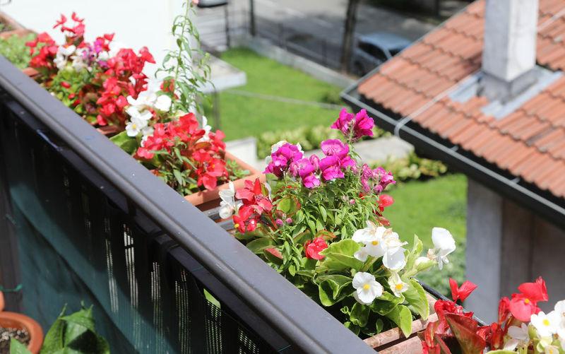 Pink flowering plants on railing
