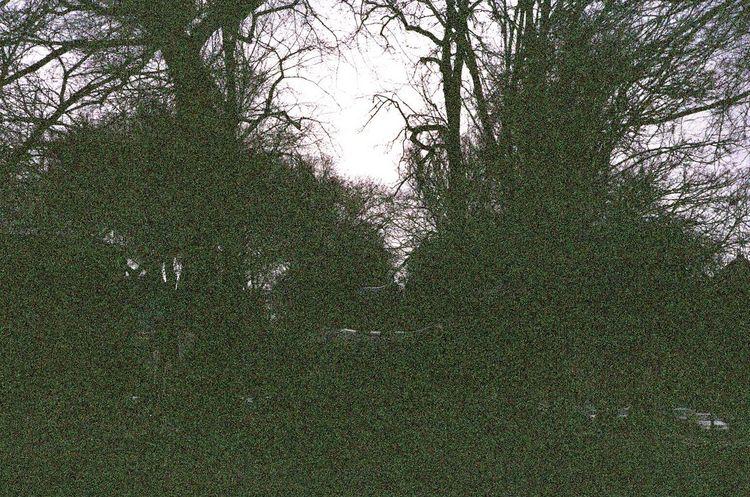 Tree No People Leicacamera Xray Damaged Film Voigtlander Lens Portland, OR Lomo F2 400 Koduckgirl Leica M6