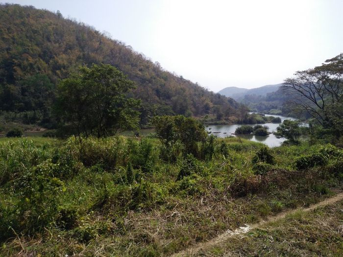 Nature Growth Beauty In Nature Mountain Scenics Tree Green Color Plant Day Landscape Water Grass Outdoors Travel Thailand