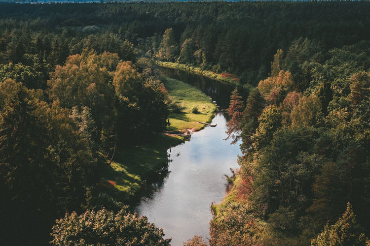 Tree Plant Water Tranquility Tranquil Scene Beauty In Nature Scenics - Nature Nature No People Growth Forest Day Reflection River High Angle View Non-urban Scene Autumn Foliage Outdoors Change WoodLand EyeEmNewHere