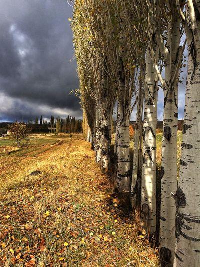 Armenia Autumn Beauty In Nature Cloud - Sky Cloudy Colors Nature Tress