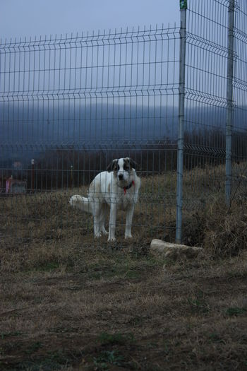 Portrait of dog standing on fence