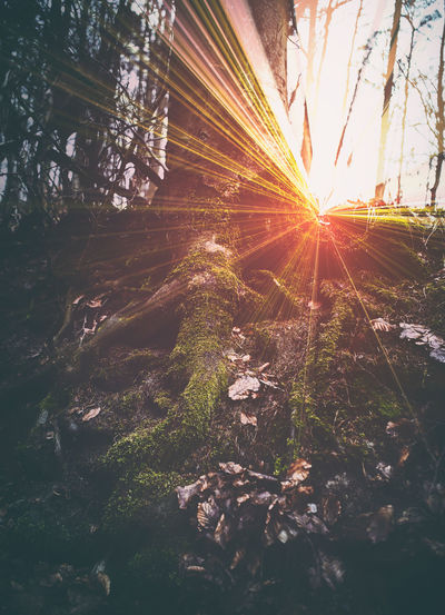 Sun dawn in the dark autumn forest Dark Sunlight Beauty In Nature darkness and light Dawn Day Forest Growth Lens Flare Nature No People Outdoors Scenics Sky Sun Sunbeam Sunlight Sunset Tranquility Tree Tree Trunk The Architect - 2018 EyeEm Awards