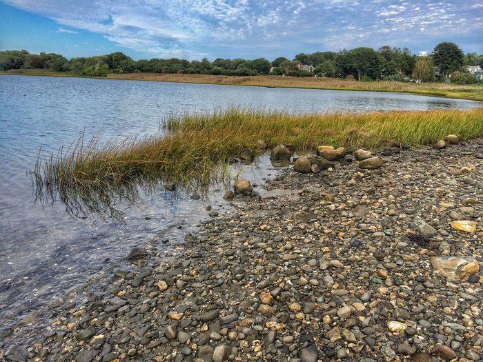 Outdoors Around Me Photo. Jamestown RI Marsh Grass