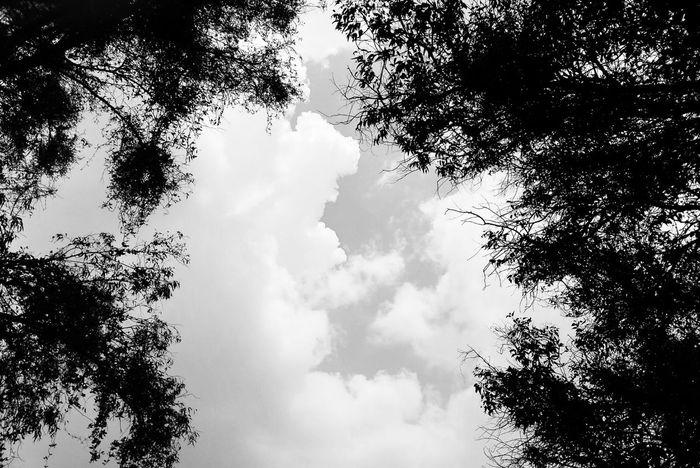 Solo mira hacia arriba Self Perspective Walker Sky