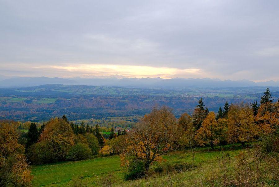 Scenics - Nature Landscape Environment Mountain Forest Range Tree Nature Pfaffenwinkel Oberbayern Autumncolours