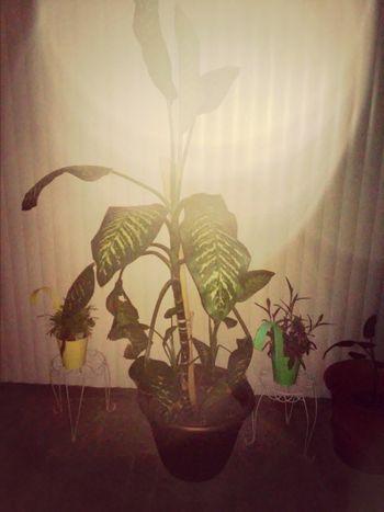 Plants Urban Greenery House Plant