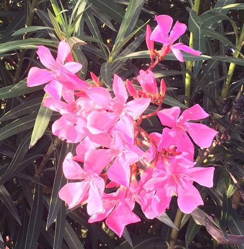 Flower Pink Color Growth Petal Fragility Beauty In Nature Freshness Nature Plant No People Outdoors Blooming Day Flower Head Springtime Close-up