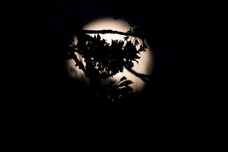 Close-up of silhouette plant against dark sky