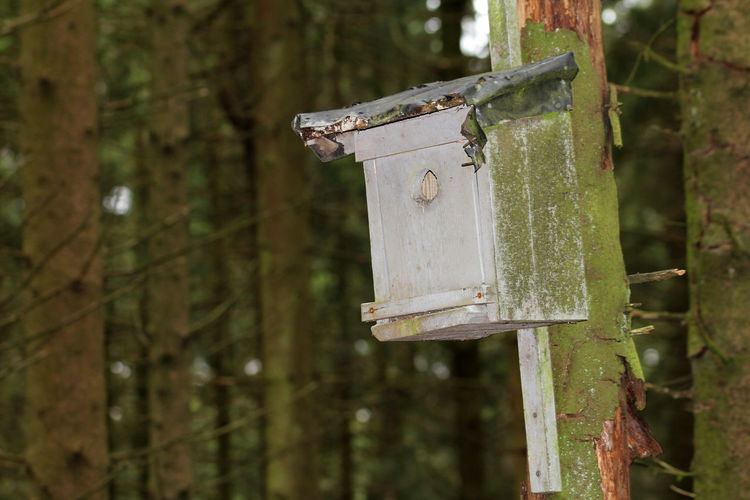 Bird Nesting Box. Nesting Box Focus On Foreground Tree Plant Day Land No People Birdhouse Close-up Outdoors Nature Metal Forest Wood - Material Trunk Tree Trunk Safety Old