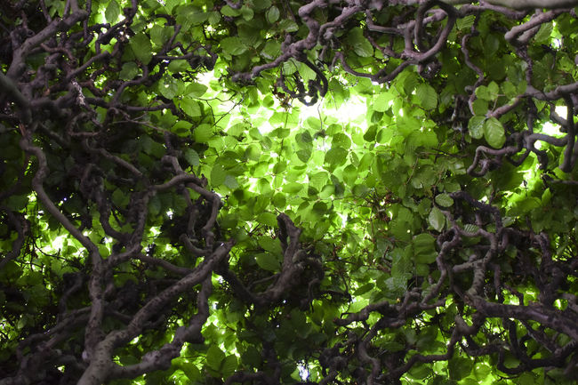 Branch Day Green Color Growth Leaf Low Angle View Nature No People Outdoors Plant Plant Part Tree