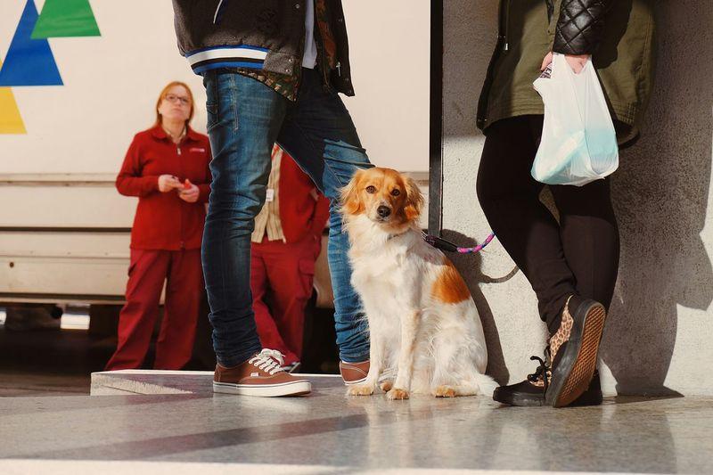 Bizarre love triangle... Geometric Shapes Dog Streetphotography