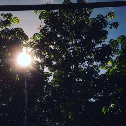 Vietnam Goodmorning Sun Tree Light Nature Growth Sunbeam Beauty In Nature Sky Outdoors Low Angle View Day Mặt Trời Chiều Toi Mong