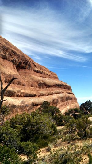 Plants by rock formation against sky at arches national park