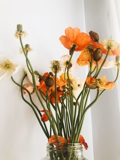 Close-up of orange flower vase against wall