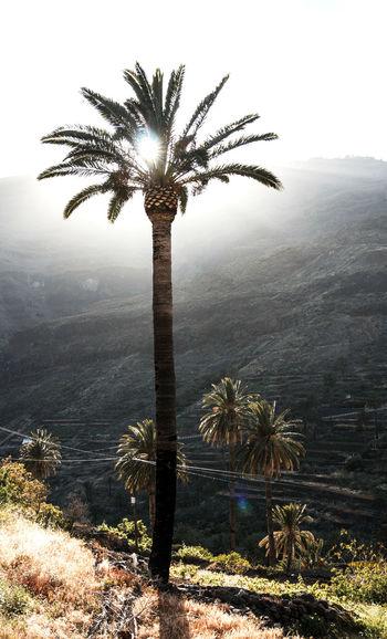 Palm tree against bright sun