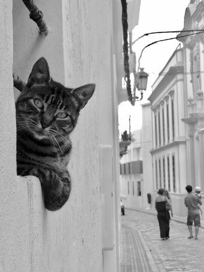 Cat on street amidst buildings in city