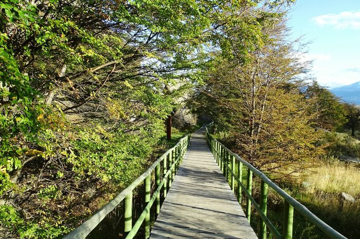 Tree The Way Forward Railing Growth Green Color Plant Branch Tranquil Scene Tranquility Green Bridge - Man Made Structure Footbridge Narrow Nature Day Scenics Outdoors Sky Long Lush Foliage