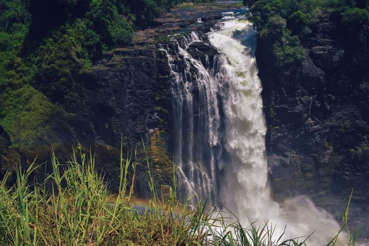 Scenic view of waterfall in forest, victoria falls, zimbabwe