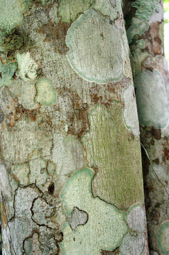 bark of a jungle tree Backgrounds Bark Bark Texture Bark Texture Background Close-up Day Forest Forest Photography Forest Trees Full Frame High Angle View Jungle Jungle Plant Nature Nature Nature Photography Nature_collection Naturelovers No People Outdoors Textured