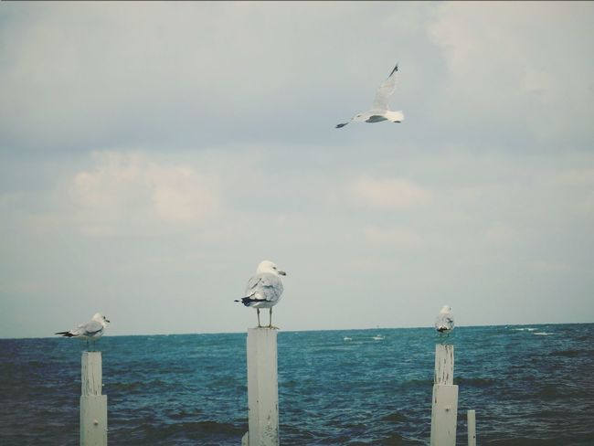 Seagulls At The Lake Seagull. Seagull Serenity Seagull, Birds, Flight, Fly, Hover, Feathers, Wings, Beaks, Span, Seagulls Flying