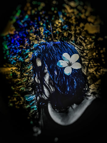 Flower Female Dramatic Outdoors Evening Flower Blue Multi Colored Close-up Flower Head Single Flower