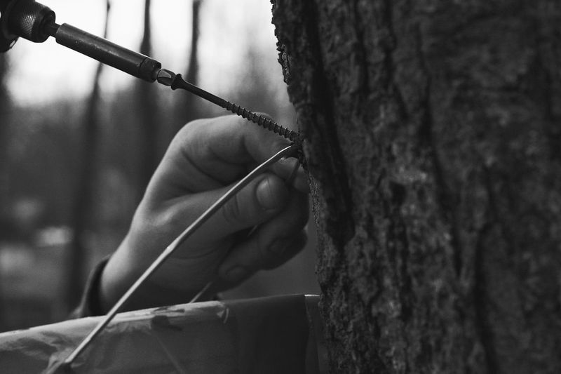 Screw Drill Tool Maple Tree Maple Human Hand Human Body Part Real People One Person Outdoors Day Blackandwhite Black & White Blackandwhite Photography Tree Tree Tapping Working EyeEm Popular Photos Check This Out EyeEm Best Shots EyeEm Gallery Photooftheday Photo Photography